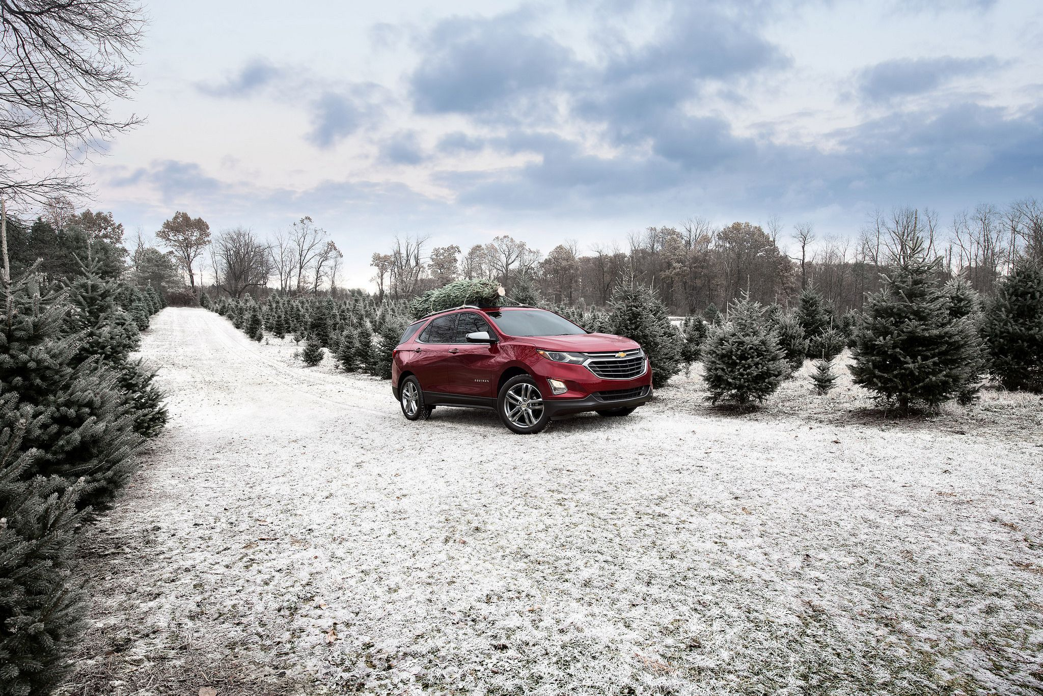 Transporting Christmas Trees: Prepare for the Holidays